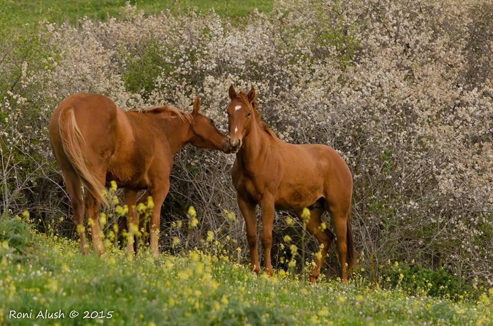 נקודת חן – חוות סוסים בקיבוץ עין זיוון