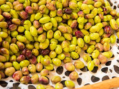 פסטיבל ימי ענף הזית בגליל